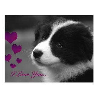 Border Collie, I Love You.. Postcard