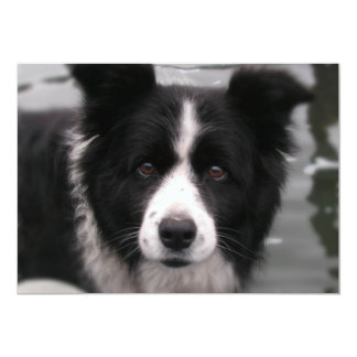 Border Collie Invitation