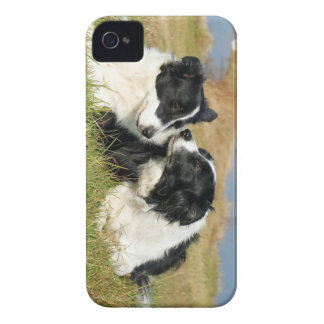Border Collie iPhone 4S Cover