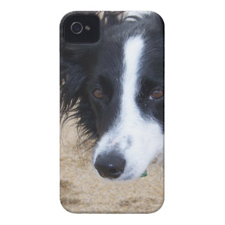 Border Collie items iPhone 4 Case-Mate Case