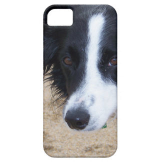 Border Collie items iPhone 5 Cover