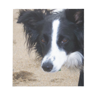 Border Collie items Notepad
