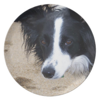 Border Collie items Plate