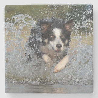 Border Collie jumping in water Stone Coaster