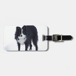 Border Collie Luggage Tag