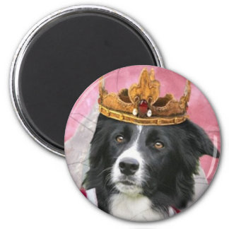 Border Collie Magnet~Queen For A Day 2 Inch Round Magnet
