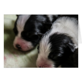 Border Collie Newborn Puppies Card