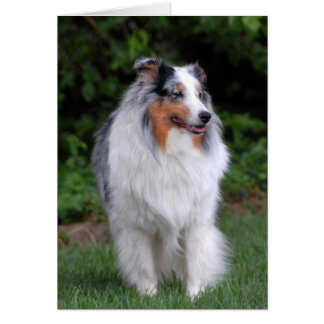 Border Collie note card
