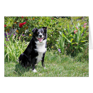 Border Collie - Paddy - Pasten Card