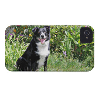Border Collie - Paddy - Pasten Case-Mate iPhone 4 Cases