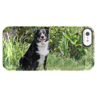 Border Collie - Paddy - Pasten Clear iPhone SE/5/5s Case