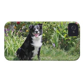 Border Collie - Paddy - Pasten iPhone 4 Case-Mate Case