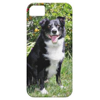 Border Collie - Paddy - Pasten iPhone 5 Case