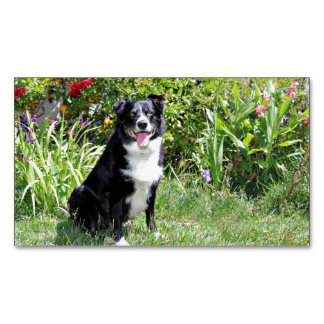 Border Collie - Paddy - Pasten Magnetic Business Card