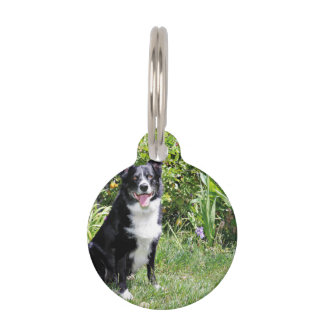 Border Collie - Paddy - Pasten Pet Tag