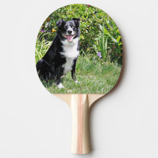 Border Collie - Paddy - Pasten Ping-Pong Paddle