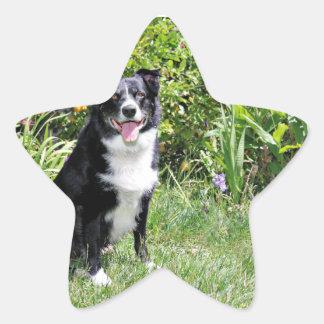 Border Collie - Paddy - Pasten Star Sticker