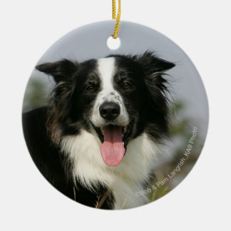 Border Collie Panting Headshot 1 Ceramic Ornament