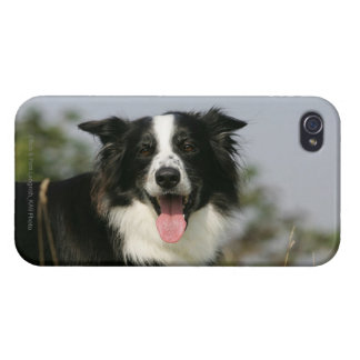 Border Collie Panting Headshot 1 iPhone 4 Case