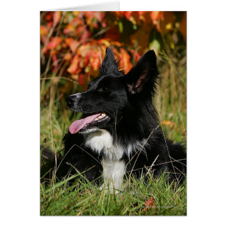 Border Collie Panting Laying Down Card