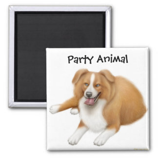 Border Collie Party Animal Magnet