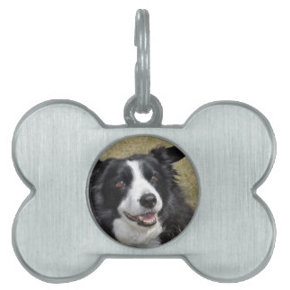Border Collie Pet ID Tags