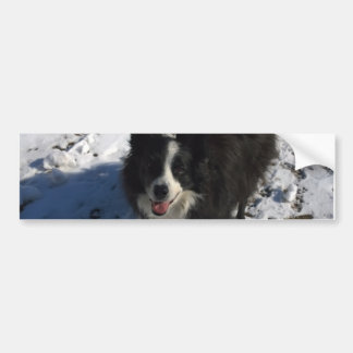 Border Collie photo on products Bumper Sticker