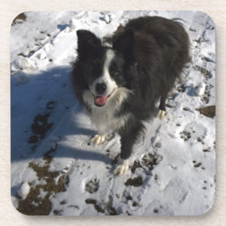 Border Collie photo on products Coaster
