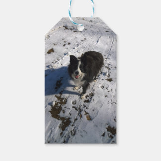 Border Collie photo on products Gift Tags