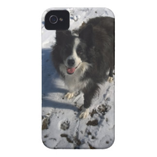 Border Collie photo on products iPhone 4 Case-Mate Case