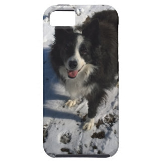 Border Collie photo on products iPhone 5 Cover