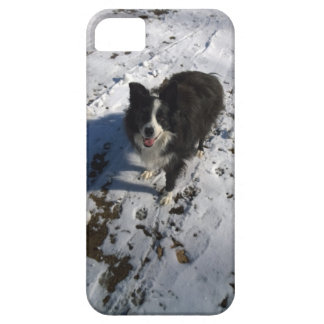 Border Collie photo on products iPhone 5 Covers