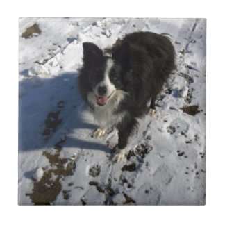 Border Collie photo on products Tile