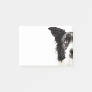 Border Collie Portrait Post-it Notes