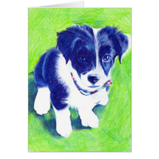 Border Collie Pup in coloured Pencil Card