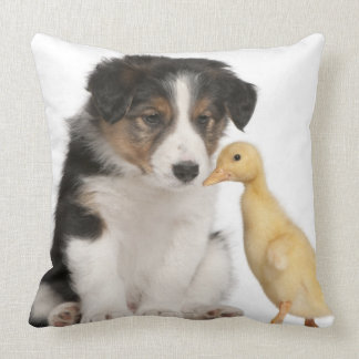 Border collie puppy (6 weeks old) with duckling pillow