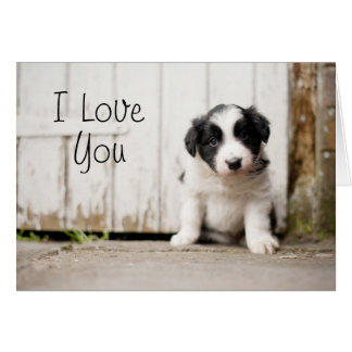 Border Collie Puppy Card