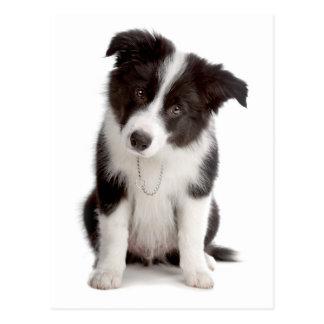 Border Collie Puppy Dog - Blank, Hello, Love Postcard