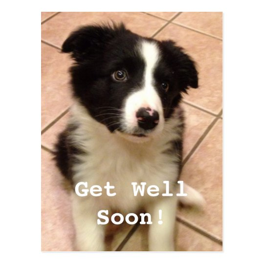 Border Collie Puppy Get Well Postcard