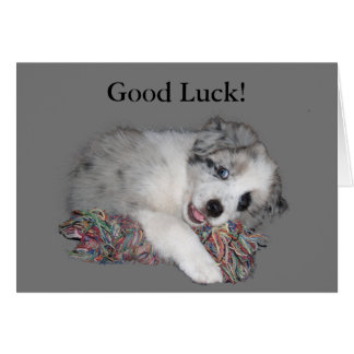 Border Collie puppy good luck card
