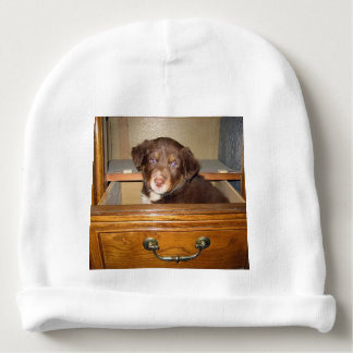 border collie puppy in drawr baby beanie