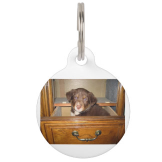 border collie puppy in drawr pet name tag