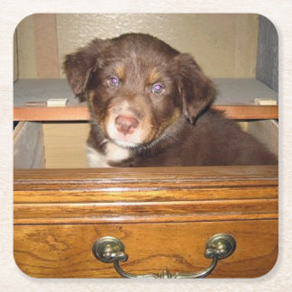 border collie puppy in drawr square paper coaster