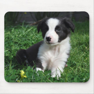 Border collie puppy mouse pad