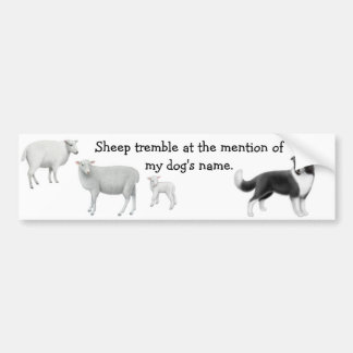 Border Collie & Sheep Herding Bumper Sticker