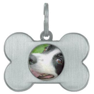 Border Collie Smile Pet Tags