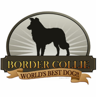 Border Collie Standing Photo Sculpture