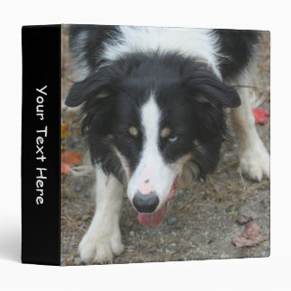 Border Collie Stare Animal 3 Ring Binder