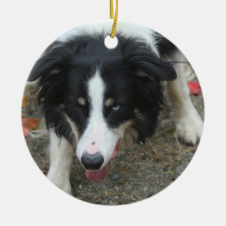Border Collie Stare Dog Ceramic Ornament