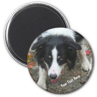 Border Collie Stare Dog Magnet